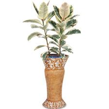 뱅갈고무나무 s9607